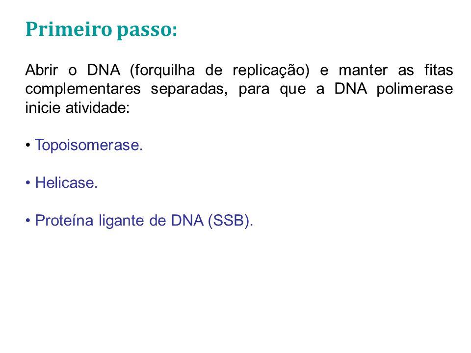 Primeiro passo: Abrir o DNA (forquilha de replicação) e manter as fitas complementares separadas, para que a DNA polimerase inicie atividade: Topoisomerase.