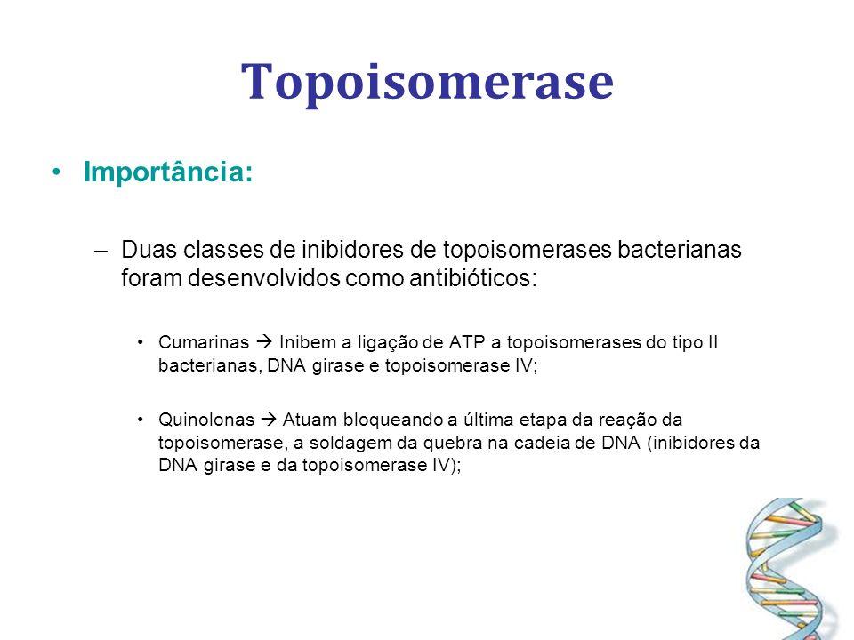 Topoisomerase Importância: –Duas classes de inibidores de topoisomerases bacterianas foram desenvolvidos como antibióticos: Cumarinas Inibem a ligação de ATP a topoisomerases do tipo II bacterianas, DNA girase e topoisomerase IV; Quinolonas Atuam bloqueando a última etapa da reação da topoisomerase, a soldagem da quebra na cadeia de DNA (inibidores da DNA girase e da topoisomerase IV);