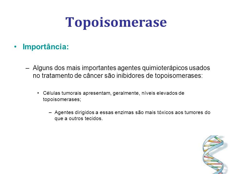 Topoisomerase Importância: –Alguns dos mais importantes agentes quimioterápicos usados no tratamento de câncer são inibidores de topoisomerases: Células tumorais apresentam, geralmente, níveis elevados de topoisomerases; –Agentes dirigidos a essas enzimas são mais tóxicos aos tumores do que a outros tecidos.