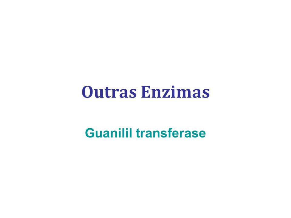 Outras Enzimas Guanilil transferase