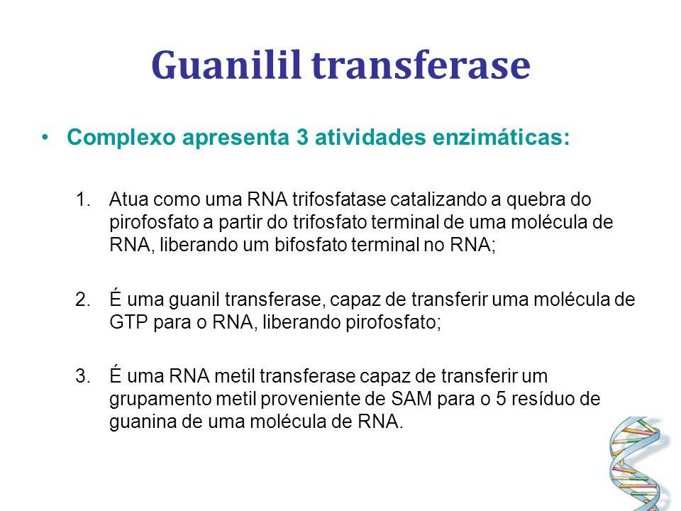 Guanilil transferase Complexo apresenta 3 atividades enzimáticas: 1.Atua como uma RNA trifosfatase catalizando a quebra do pirofosfato a partir do trifosfato terminal de uma molécula de RNA, liberando um bifosfato terminal no RNA; 2.É uma guanil transferase, capaz de transferir uma molécula de GTP para o RNA, liberando pirofosfato; 3.É uma RNA metil transferase capaz de transferir um grupamento metil proveniente de SAM para o 5 resíduo de guanina de uma molécula de RNA.