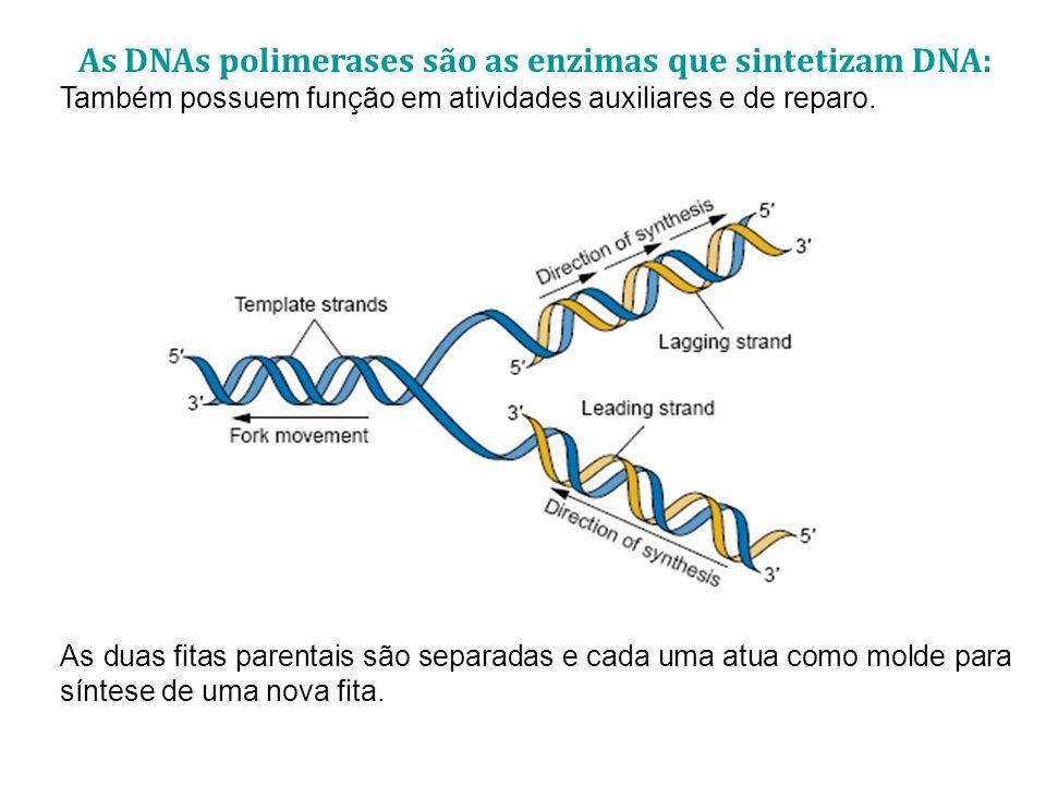 As DNAs polimerases são as enzimas que sintetizam DNA: Também possuem função em atividades auxiliares e de reparo. As duas fitas parentais são separad