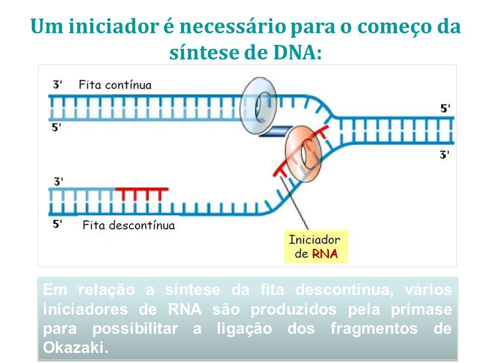 Em relação a síntese da fita descontínua, vários iniciadores de RNA são produzidos pela primase para possibilitar a ligação dos fragmentos de Okazaki.