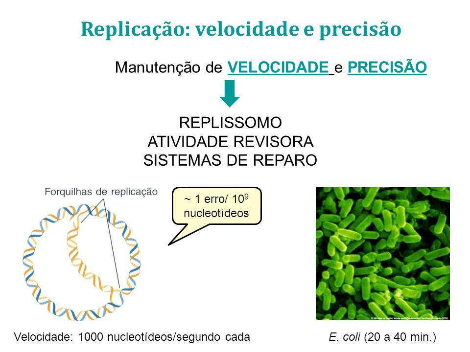 Velocidade: 1000 nucleotídeos/segundo cada Manutenção de VELOCIDADE e PRECISÃO REPLISSOMO ATIVIDADE REVISORA SISTEMAS DE REPARO E. coli (20 a 40 min.)
