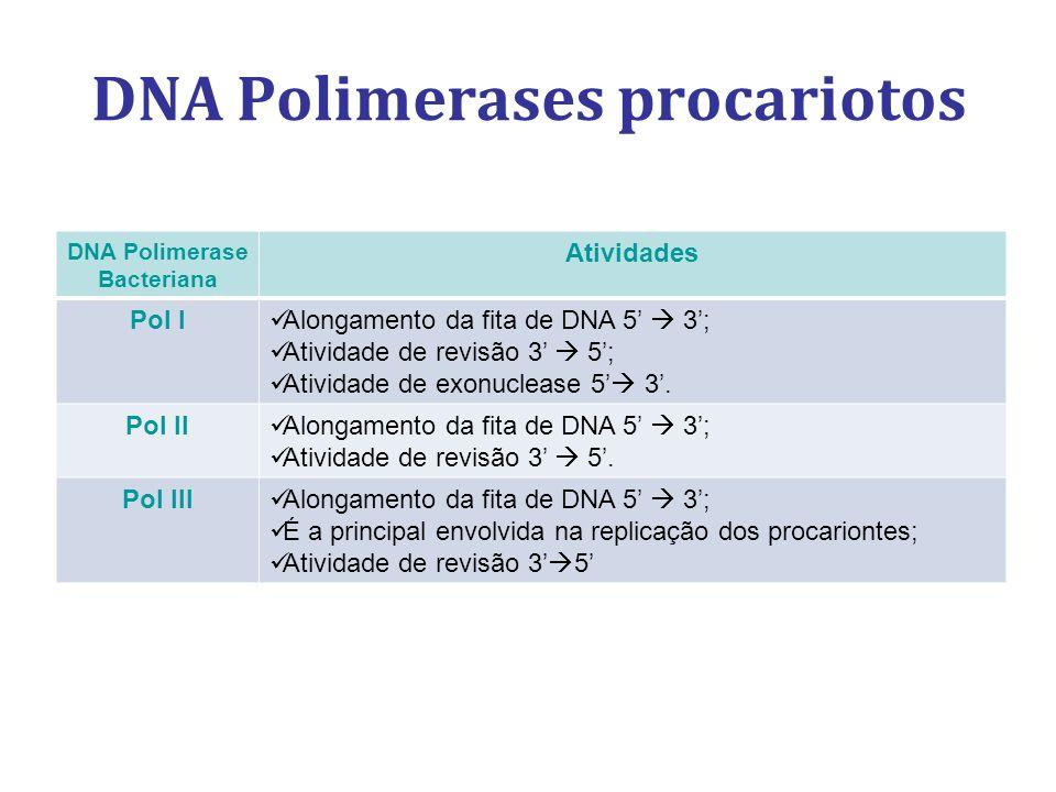 DNA Polimerases procariotos DNA Polimerase Bacteriana Atividades Pol I Alongamento da fita de DNA 5 3; Atividade de revisão 3 5; Atividade de exonucle