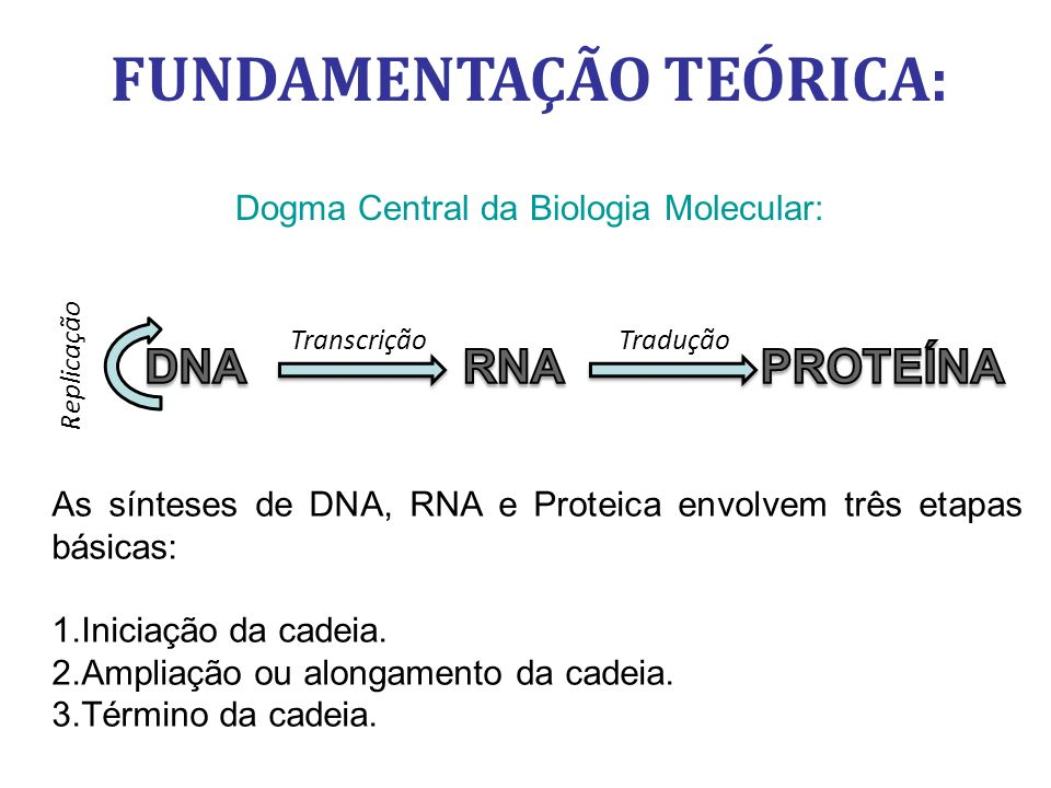 FUNDAMENTAÇÃO TEÓRICA: Dogma Central da Biologia Molecular: Tradução Replicação Transcrição As sínteses de DNA, RNA e Proteica envolvem três etapas básicas: 1.
