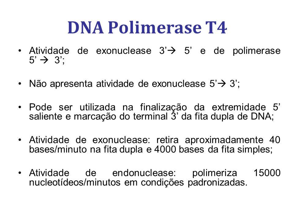 DNA Polimerase T4 Atividade de exonuclease 3 5 e de polimerase 5 3; Não apresenta atividade de exonuclease 5 3; Pode ser utilizada na finalização da extremidade 5 saliente e marcação do terminal 3 da fita dupla de DNA; Atividade de exonuclease: retira aproximadamente 40 bases/minuto na fita dupla e 4000 bases da fita simples; Atividade de endonuclease: polimeriza 15000 nucleotídeos/minutos em condições padronizadas.