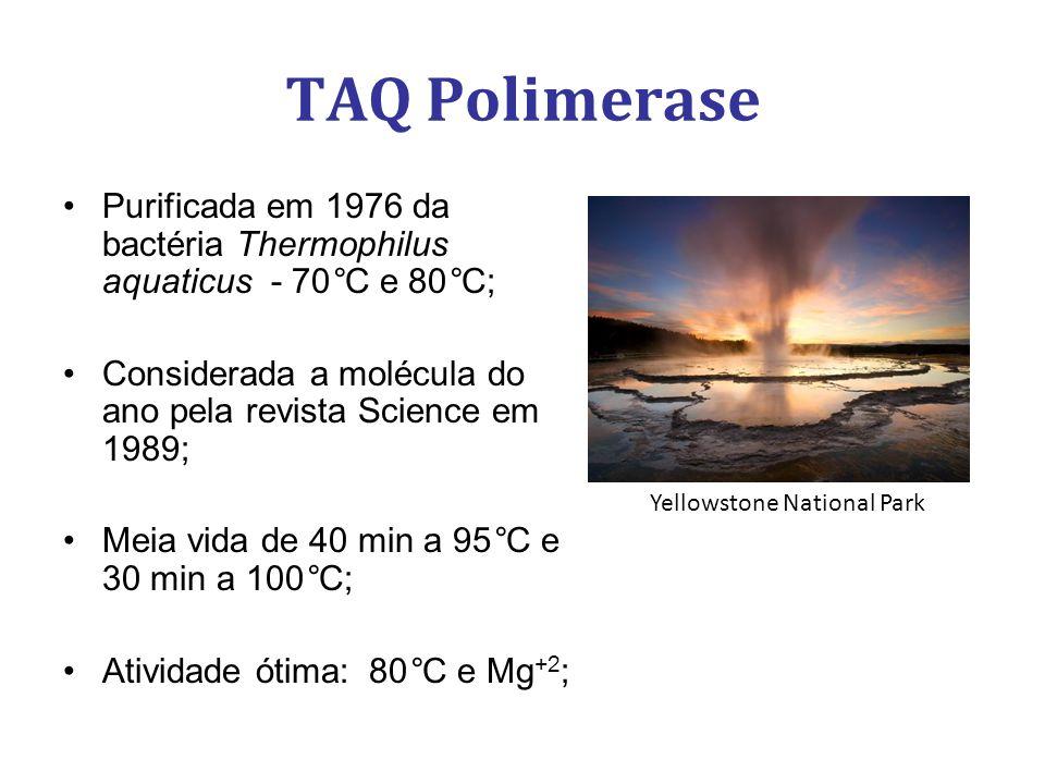 TAQ Polimerase Purificada em 1976 da bactéria Thermophilus aquaticus - 70°C e 80°C; Considerada a molécula do ano pela revista Science em 1989; Meia vida de 40 min a 95°C e 30 min a 100°C; Atividade ótima: 80°C e Mg +2 ; Yellowstone National Park