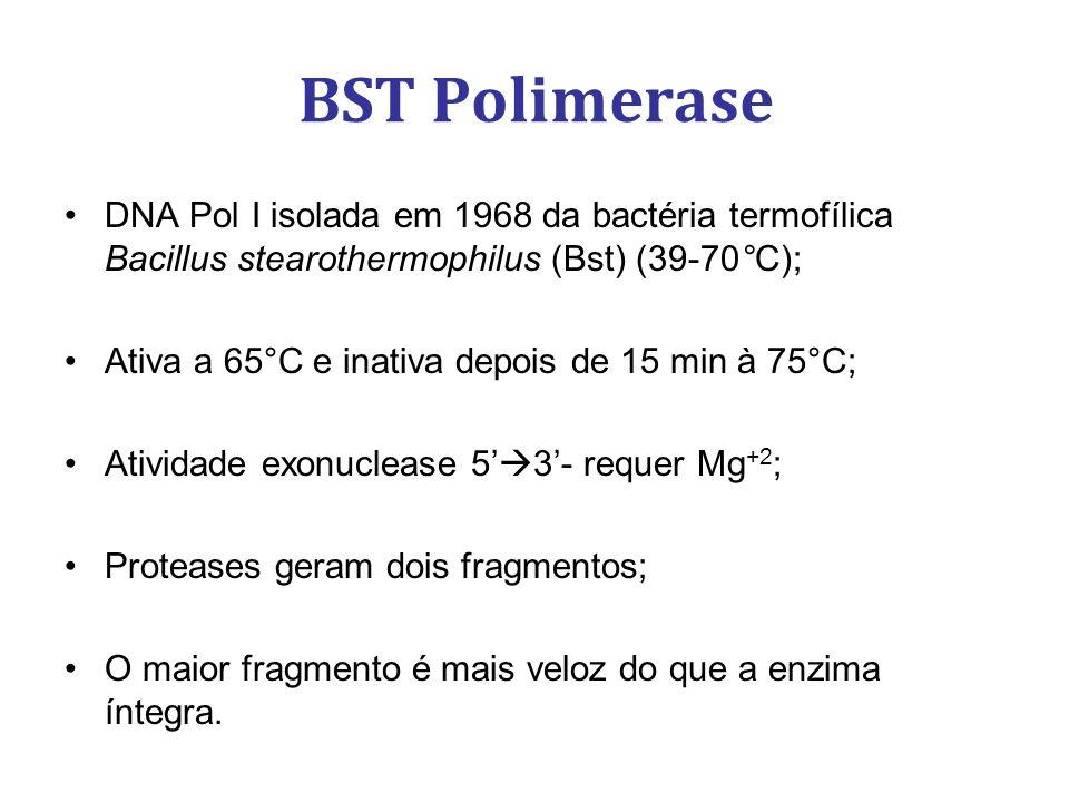 BST Polimerase DNA Pol I isolada em 1968 da bactéria termofílica Bacillus stearothermophilus (Bst) (39-70°C); Ativa a 65°C e inativa depois de 15 min à 75°C; Atividade exonuclease 5 3- requer Mg +2 ; Proteases geram dois fragmentos; O maior fragmento é mais veloz do que a enzima íntegra.