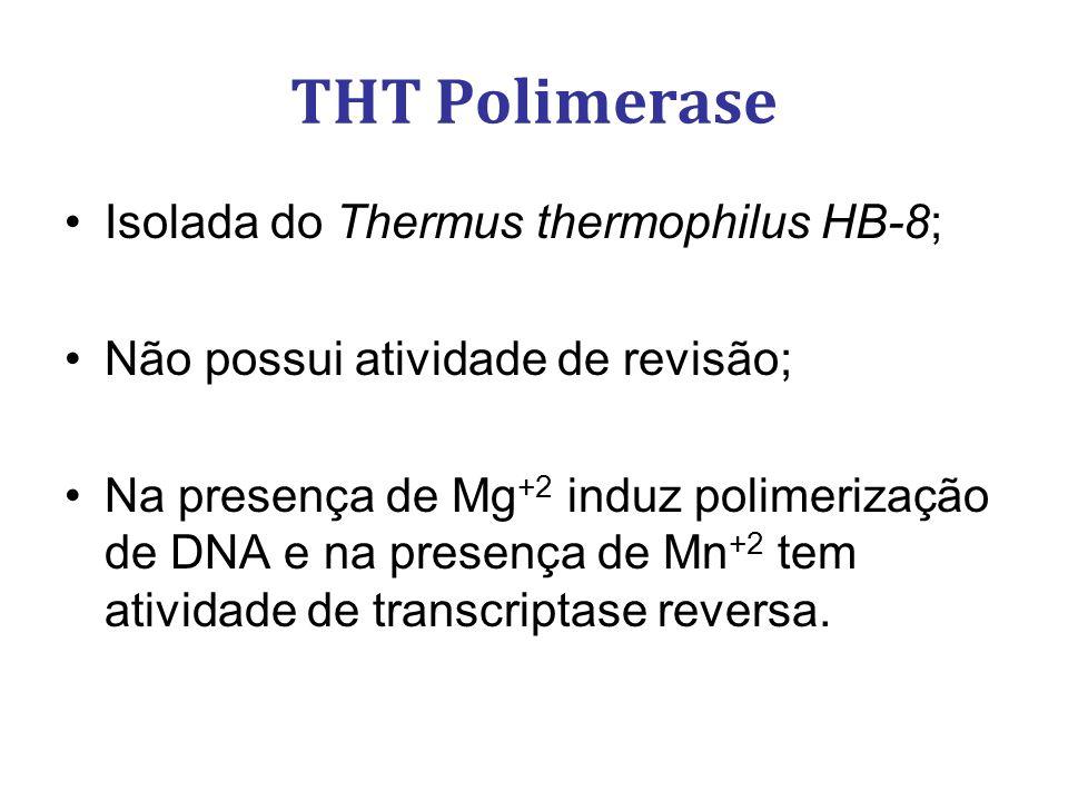 THT Polimerase Isolada do Thermus thermophilus HB-8; Não possui atividade de revisão; Na presença de Mg +2 induz polimerização de DNA e na presença de
