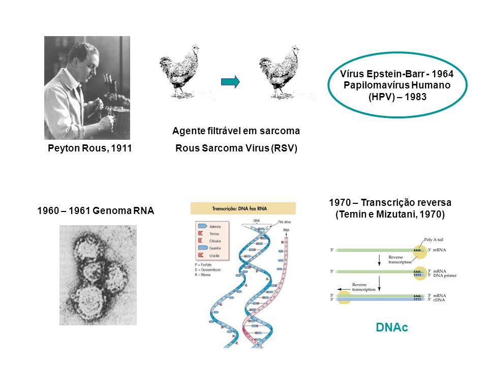Vírus Epstein-Barr - 1964 Papilomavírus Humano (HPV) – 1983 Peyton Rous, 1911 Agente filtrável em sarcoma Rous Sarcoma Virus (RSV) 1960 – 1961 Genoma RNA 1970 – Transcrição reversa (Temin e Mizutani, 1970) DNAc