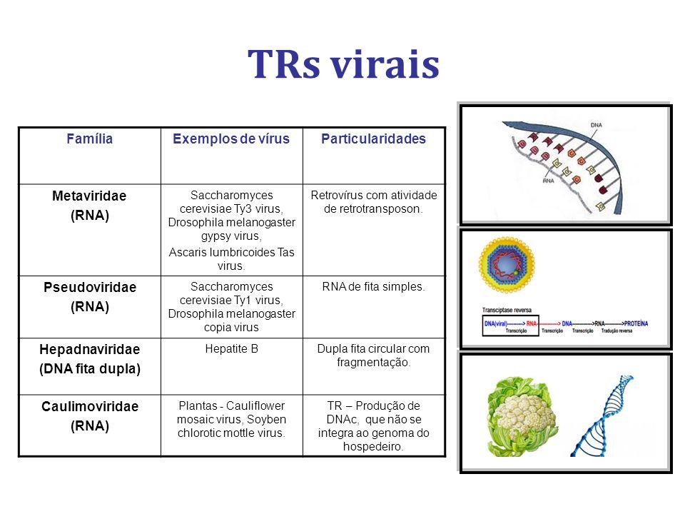 TRs virais FamíliaExemplos de vírusParticularidades Metaviridae (RNA) Saccharomyces cerevisiae Ty3 virus, Drosophila melanogaster gypsy virus, Ascaris lumbricoides Tas virus.