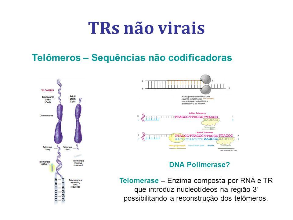 TRs não virais Telômeros – Sequências não codificadoras Telomerase – Enzima composta por RNA e TR que introduz nucleotídeos na região 3 possibilitando