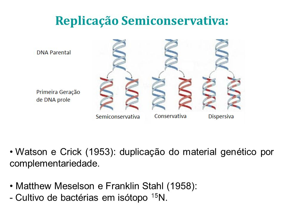 Replicação Semiconservativa: Watson e Crick (1953): duplicação do material genético por complementariedade. Matthew Meselson e Franklin Stahl (1958):