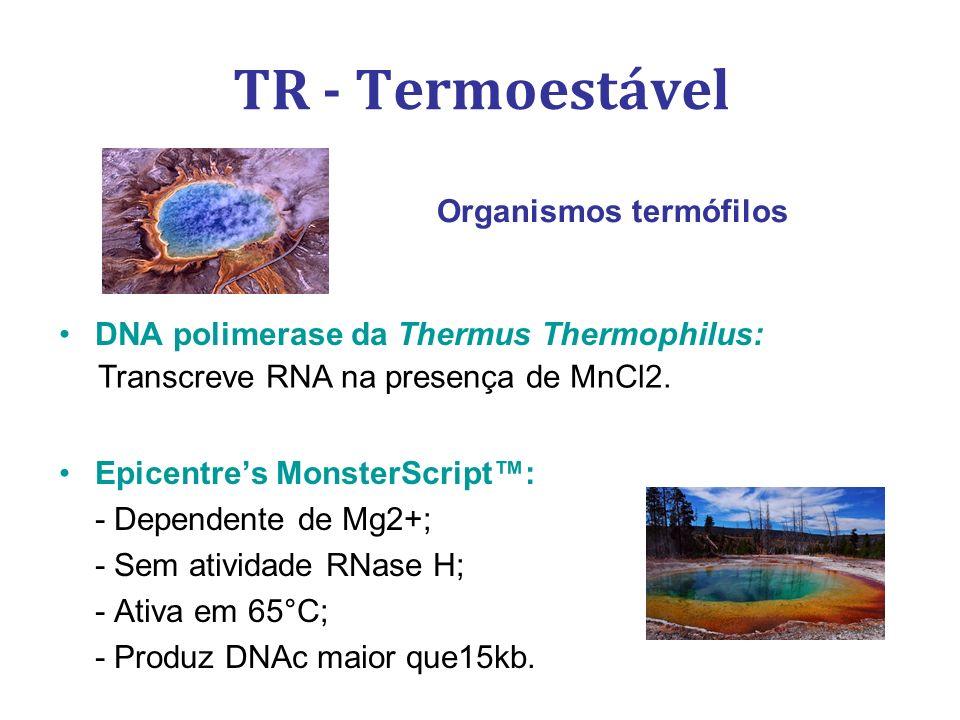 TR - Termoestável DNA polimerase da Thermus Thermophilus: Epicentres MonsterScript: - Dependente de Mg2+; - Sem atividade RNase H; - Ativa em 65°C; -