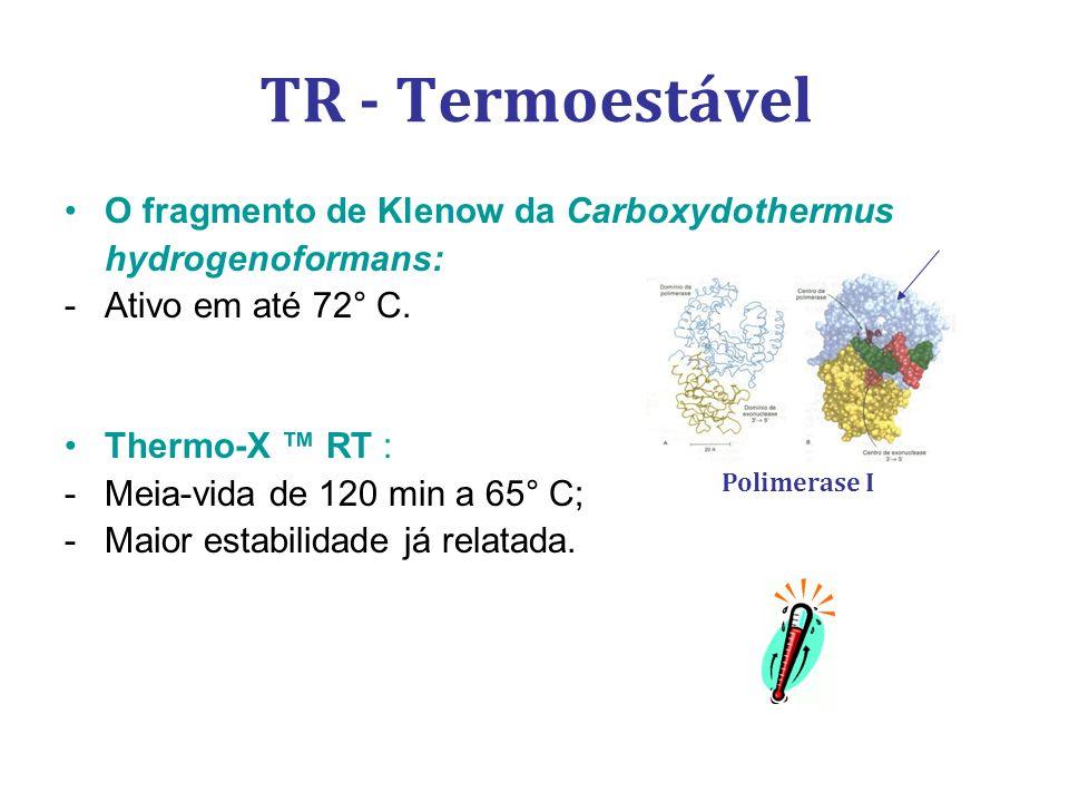O fragmento de Klenow da Carboxydothermus hydrogenoformans: -Ativo em até 72° C. Thermo-X RT : -Meia-vida de 120 min a 65° C; -Maior estabilidade já r
