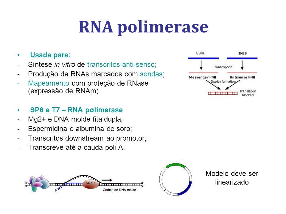 Usada para: -Síntese in vitro de transcritos anti-senso; -Produção de RNAs marcados com sondas; -Mapeamento com proteção de RNase (expressão de RNAm).