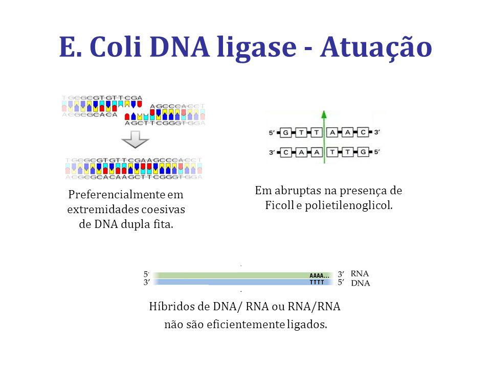 E. Coli DNA ligase - Atuação Preferencialmente em extremidades coesivas de DNA dupla fita. Em abruptas na presença de Ficoll e polietilenoglicol. Híbr