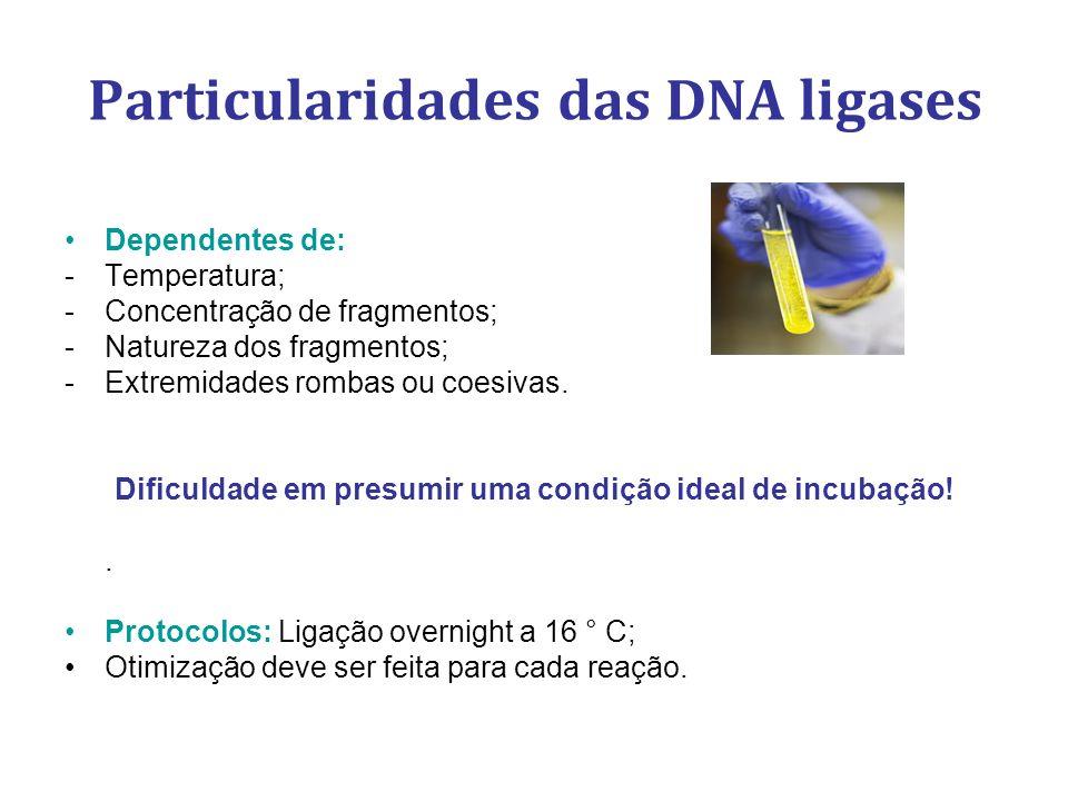 Particularidades das DNA ligases Dependentes de: -Temperatura; -Concentração de fragmentos; -Natureza dos fragmentos; -Extremidades rombas ou coesivas