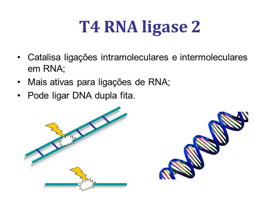 Catalisa ligações intramoleculares e intermoleculares em RNA; Mais ativas para ligações de RNA; Pode ligar DNA dupla fita. T4 RNA ligase 2