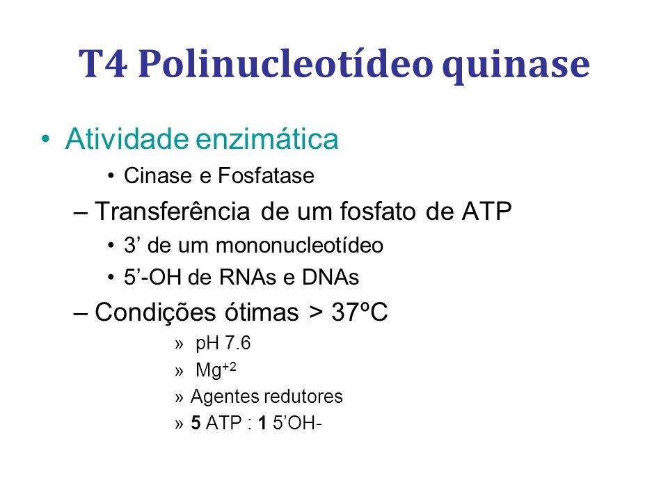Atividade enzimática Cinase e Fosfatase –Transferência de um fosfato de ATP 3 de um mononucleotídeo 5-OH de RNAs e DNAs –Condições ótimas > 37ºC » pH 7.6 » Mg +2 »Agentes redutores »5 ATP : 1 5OH- T4 Polinucleotídeo quinase