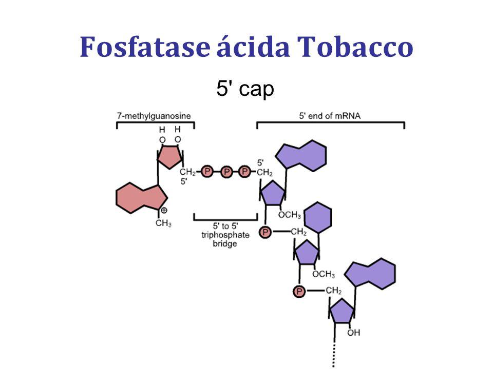 Fosfatase ácida Tobacco 5' cap