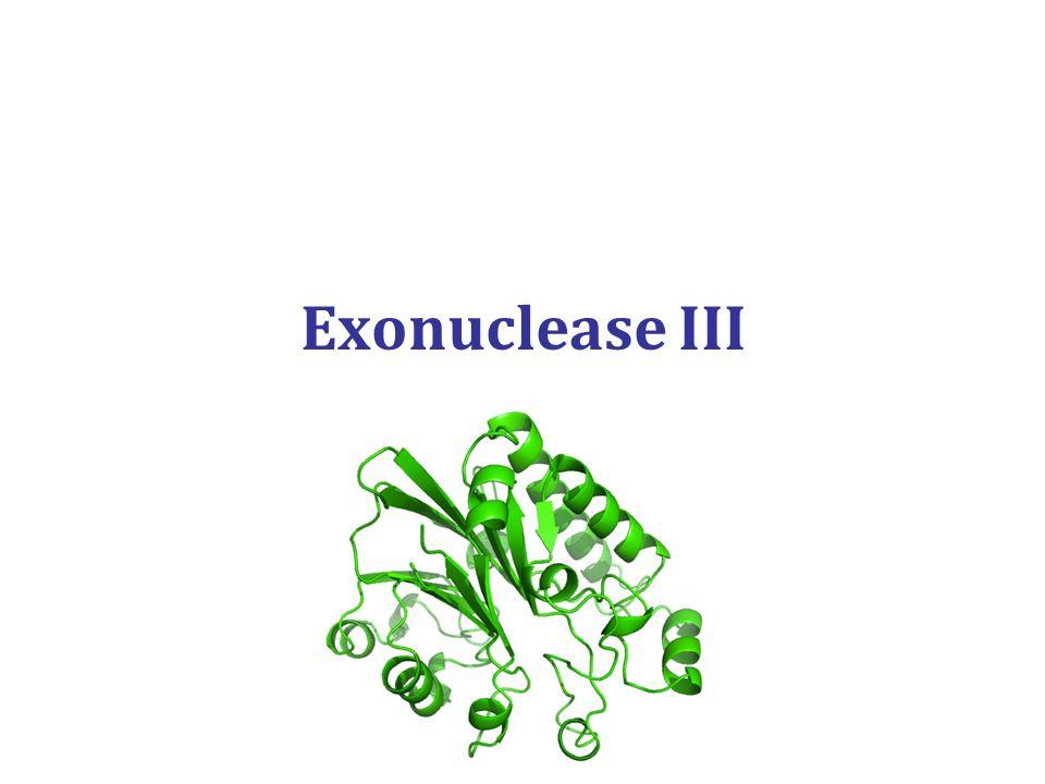 Exonuclease III