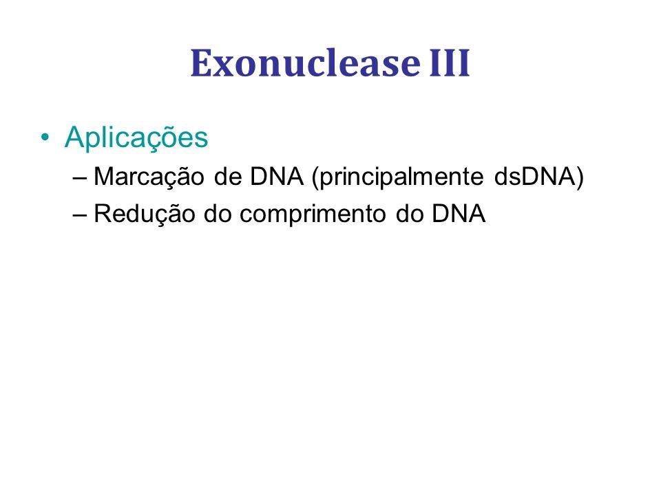 Exonuclease III Aplicações –Marcação de DNA (principalmente dsDNA) –Redução do comprimento do DNA