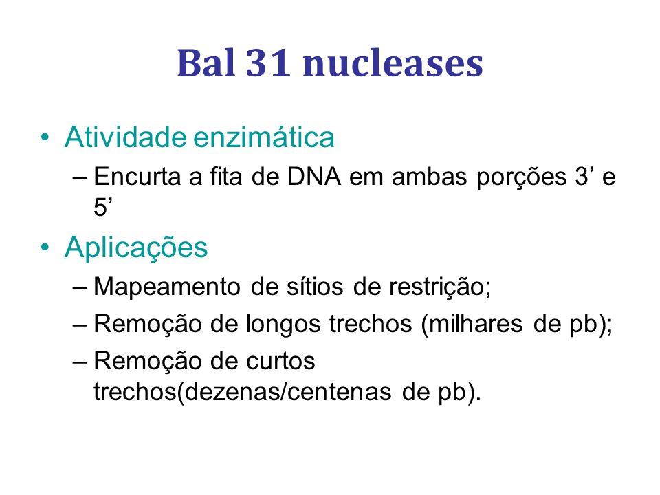 Bal 31 nucleases Atividade enzimática –Encurta a fita de DNA em ambas porções 3 e 5 Aplicações –Mapeamento de sítios de restrição; –Remoção de longos trechos (milhares de pb); –Remoção de curtos trechos(dezenas/centenas de pb).