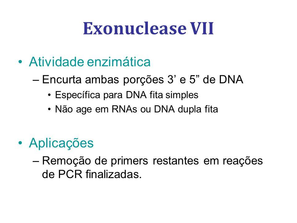 Exonuclease VII Atividade enzimática –Encurta ambas porções 3 e 5 de DNA Específica para DNA fita simples Não age em RNAs ou DNA dupla fita Aplicações –Remoção de primers restantes em reações de PCR finalizadas.