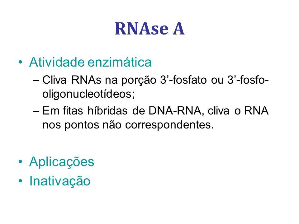 Atividade enzimática –Cliva RNAs na porção 3-fosfato ou 3-fosfo- oligonucleotídeos; –Em fitas híbridas de DNA-RNA, cliva o RNA nos pontos não correspo