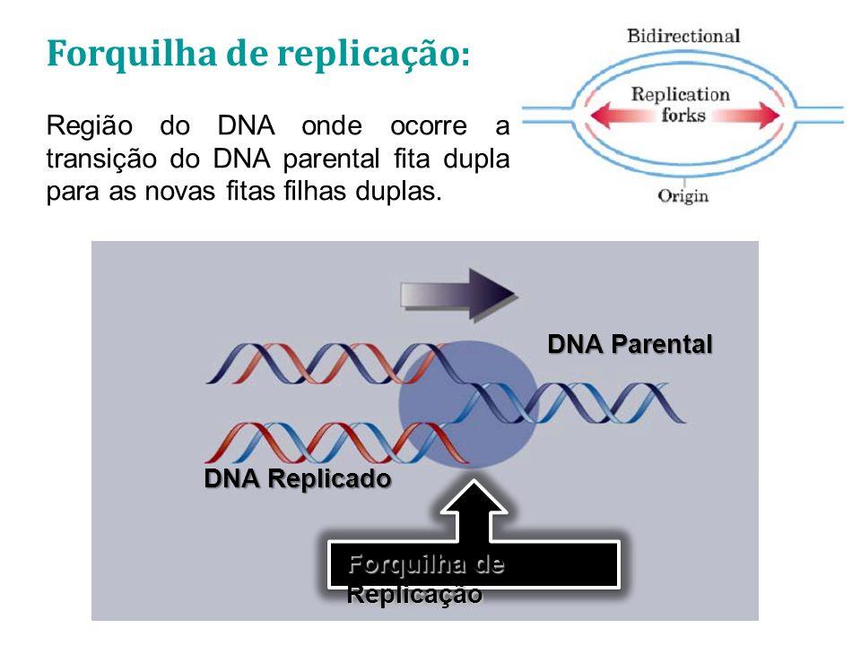Replicon: Unidade do DNA onde está ocorrendo um evento de replicação.