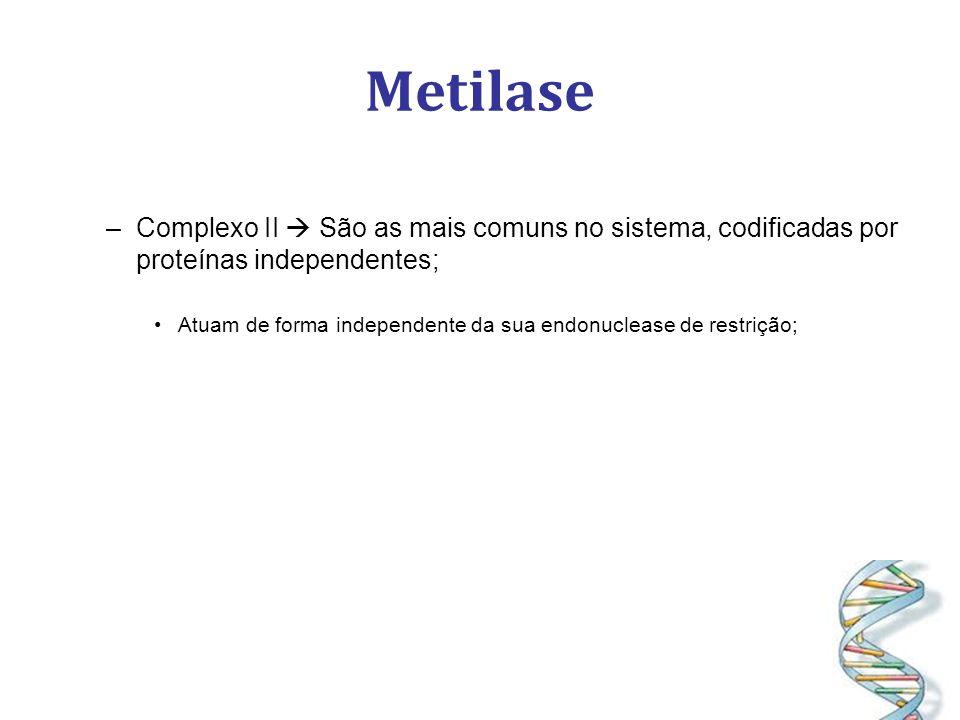 Metilase –Complexo II São as mais comuns no sistema, codificadas por proteínas independentes; Atuam de forma independente da sua endonuclease de restrição;