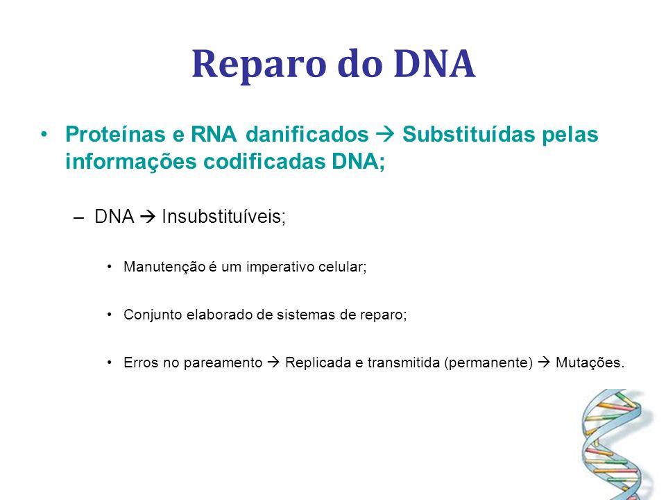 Reparo do DNA Proteínas e RNA danificados Substituídas pelas informações codificadas DNA; –DNA Insubstituíveis; Manutenção é um imperativo celular; Conjunto elaborado de sistemas de reparo; Erros no pareamento Replicada e transmitida (permanente) Mutações.