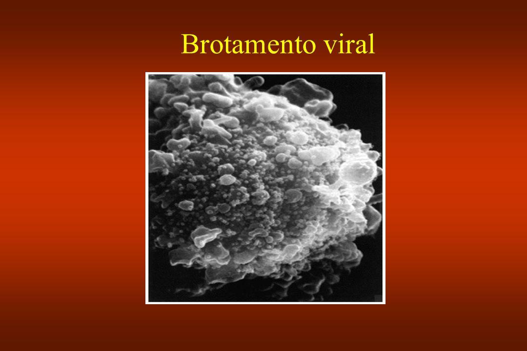 Brotamento viral