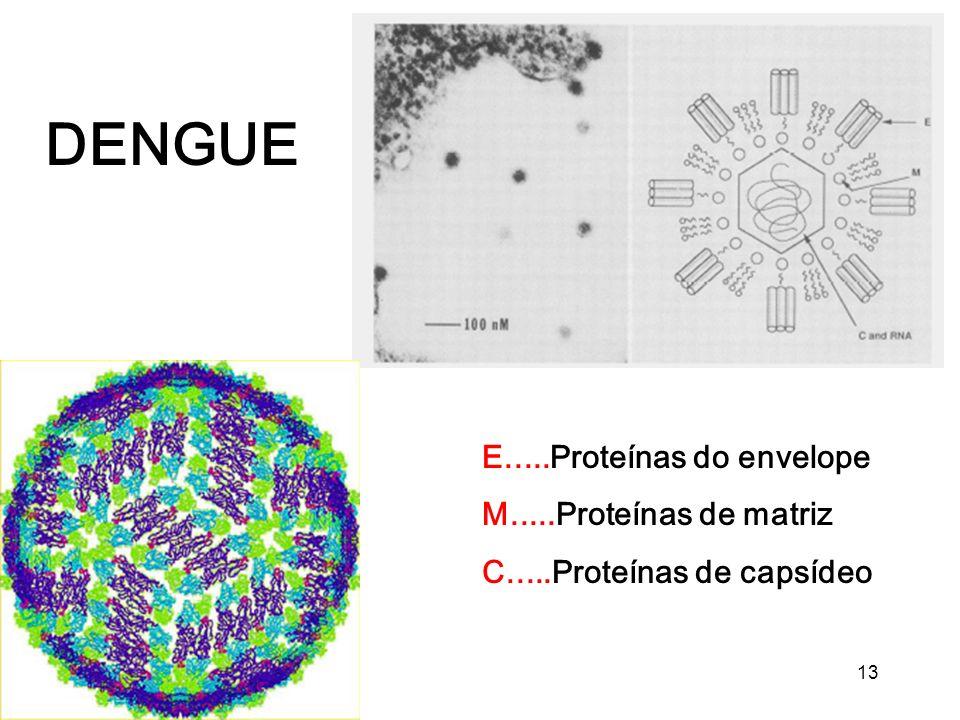 13 DENGUE E.....Proteínas do envelope M.....Proteínas de matriz C.....Proteínas de capsídeo