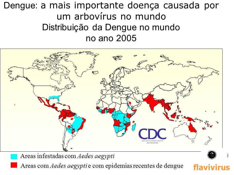 16 Dengue: a mais importante doença causada por um arbovírus no mundo Distribuição da Dengue no mundo no ano 2005 Areas infestadas com Aedes aegypti A