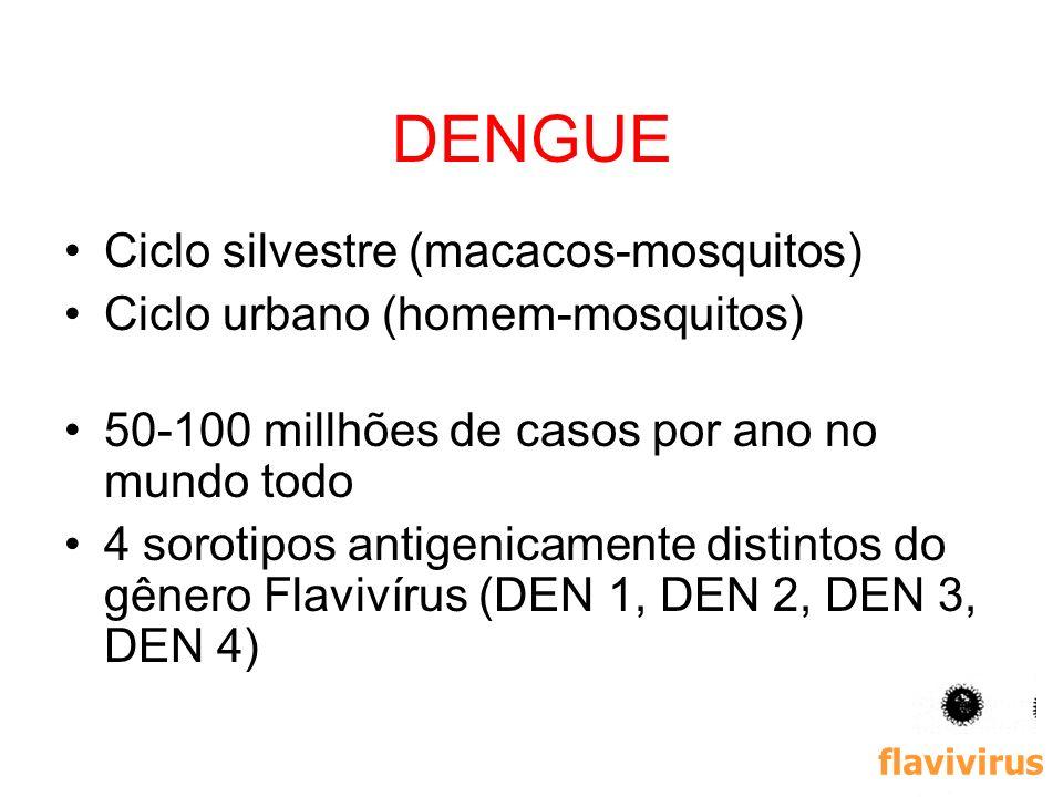 17 DENGUE Ciclo silvestre (macacos-mosquitos) Ciclo urbano (homem-mosquitos) 50-100 millhões de casos por ano no mundo todo 4 sorotipos antigenicament