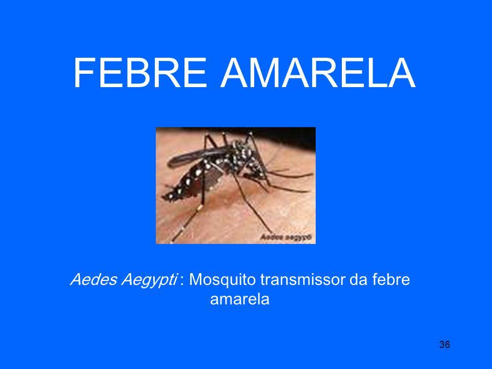 36 FEBRE AMARELA Aedes Aegypti : Mosquito transmissor da febre amarela