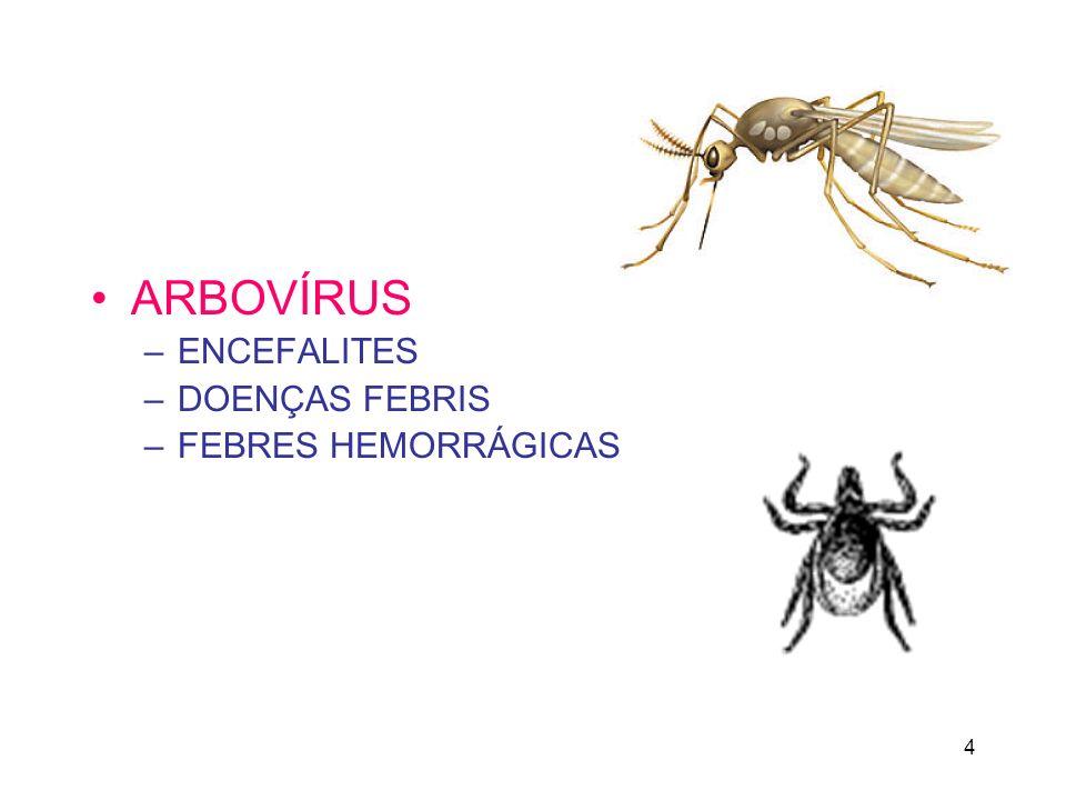 4 ARBOVÍRUS –ENCEFALITES –DOENÇAS FEBRIS –FEBRES HEMORRÁGICAS