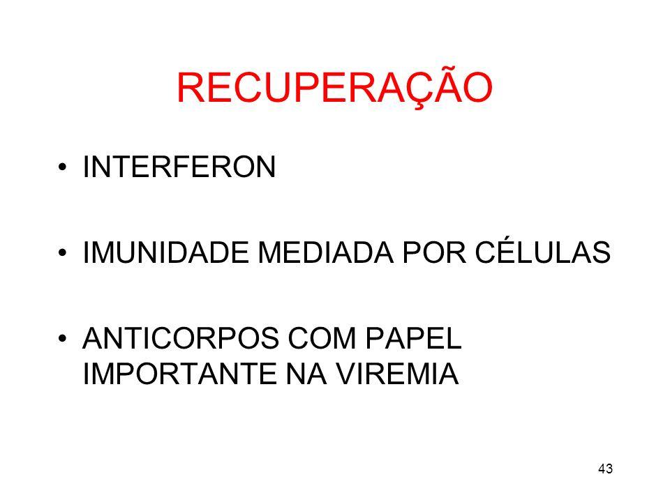 43 RECUPERAÇÃO INTERFERON IMUNIDADE MEDIADA POR CÉLULAS ANTICORPOS COM PAPEL IMPORTANTE NA VIREMIA