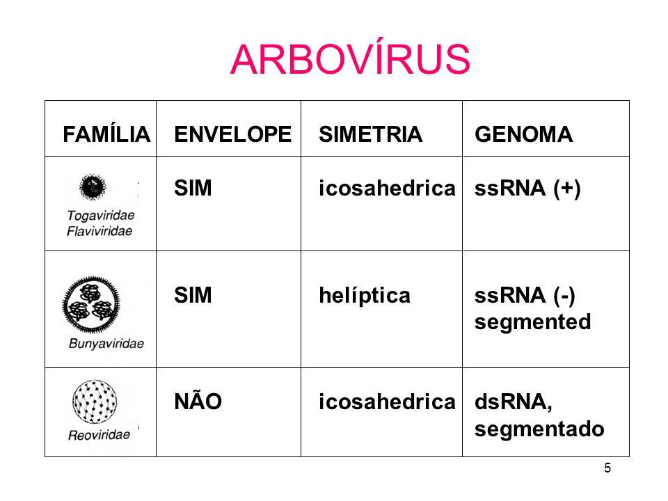 5 ARBOVÍRUS FAMÍLIAENVELOPE SIM NÃO SIMETRIA icosahedrica helíptica icosahedrica GENOMA ssRNA (+) ssRNA (-) segmented dsRNA, segmentado