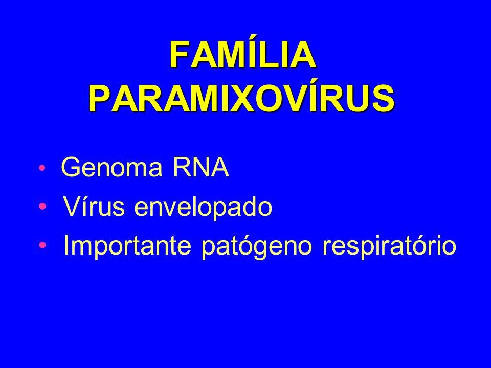 FAMÍLIA PARAMIXOVÍRUS Genoma RNA Vírus envelopado Importante patógeno respiratório