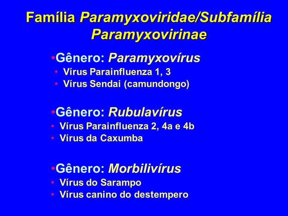 Família Paramyxoviridae/Subfamília Paramyxovirinae Gênero: Paramyxovírus Vírus Parainfluenza 1, 3 Vírus Sendai (camundongo) Gênero: Rubulavírus Vírus
