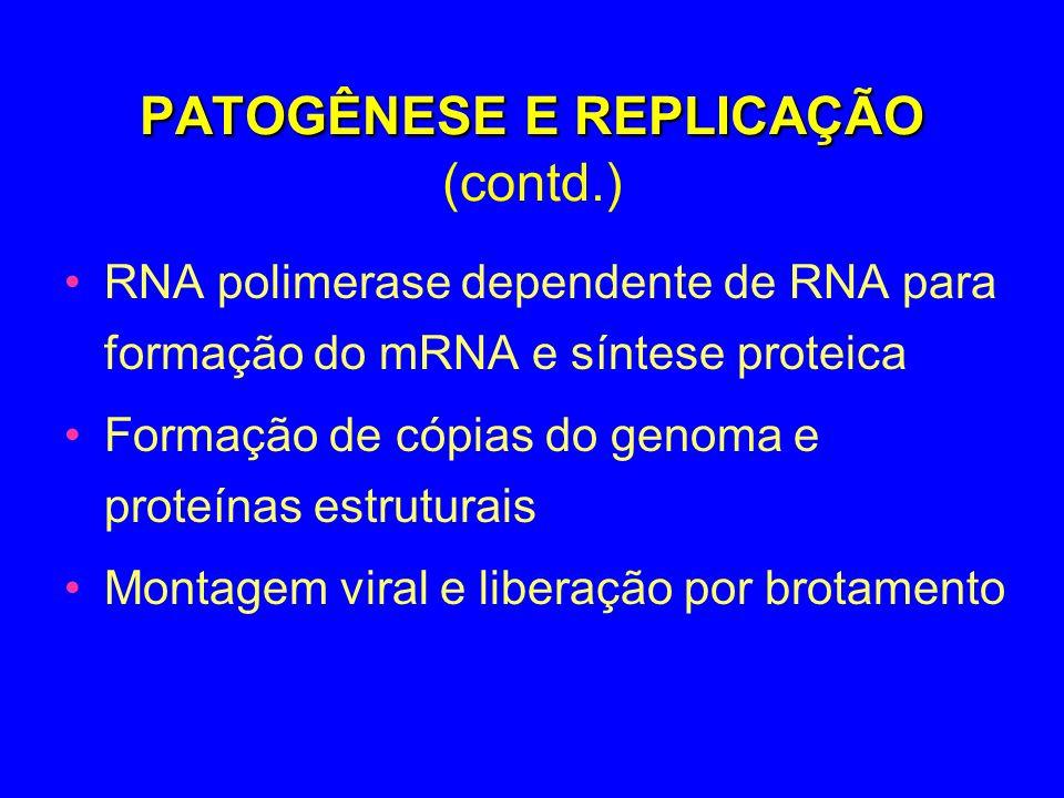 PATOGÊNESE E REPLICAÇÃO PATOGÊNESE E REPLICAÇÃO (contd.) RNA polimerase dependente de RNA para formação do mRNA e síntese proteica Formação de cópias