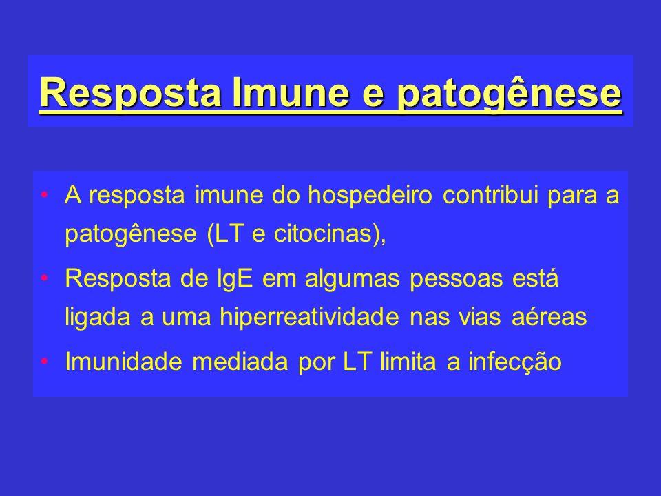 Resposta Imune e patogênese A resposta imune do hospedeiro contribui para a patogênese (LT e citocinas), Resposta de IgE em algumas pessoas está ligad