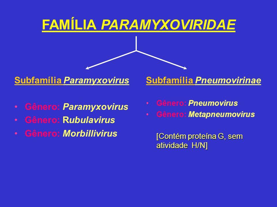FAMÍLIA PARAMYXOVIRIDAE Subfamília Paramyxovirus Gênero: Paramyxovirus Gênero: Rubulavirus Gênero: Morbillivirus Subfamília Pneumovirinae Gênero: Pneu
