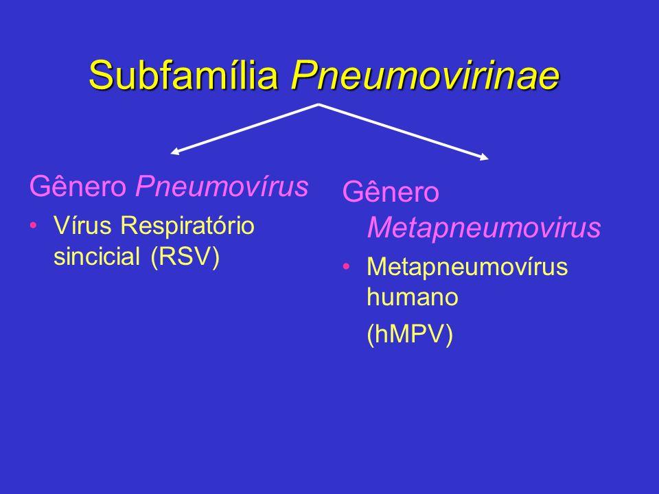 Subfamília Pneumovirinae Gênero Pneumovírus Vírus Respiratório sincicial (RSV) Gênero Metapneumovirus Metapneumovírus humano (hMPV)