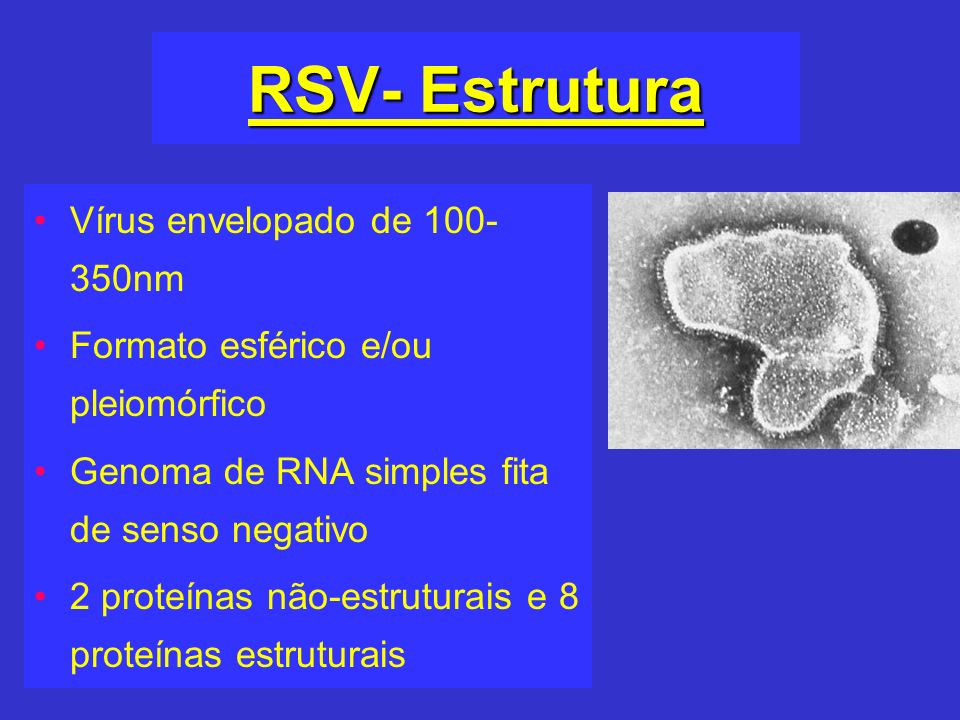 RSV- Estrutura Vírus envelopado de 100- 350nm Formato esférico e/ou pleiomórfico Genoma de RNA simples fita de senso negativo 2 proteínas não-estrutur