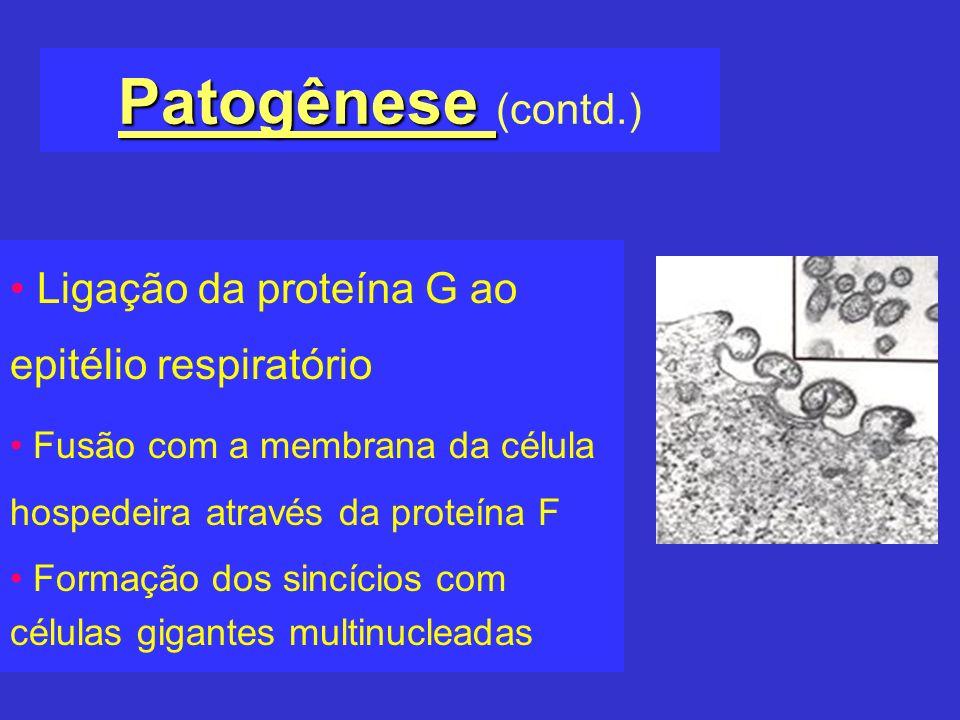 Patogênese Patogênese (contd.) Ligação da proteína G ao epitélio respiratório Fusão com a membrana da célula hospedeira através da proteína F Formação